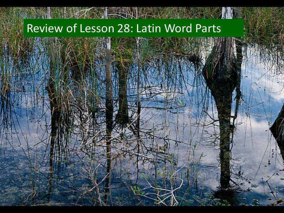 Review of Lesson 28: Latin Word Parts
