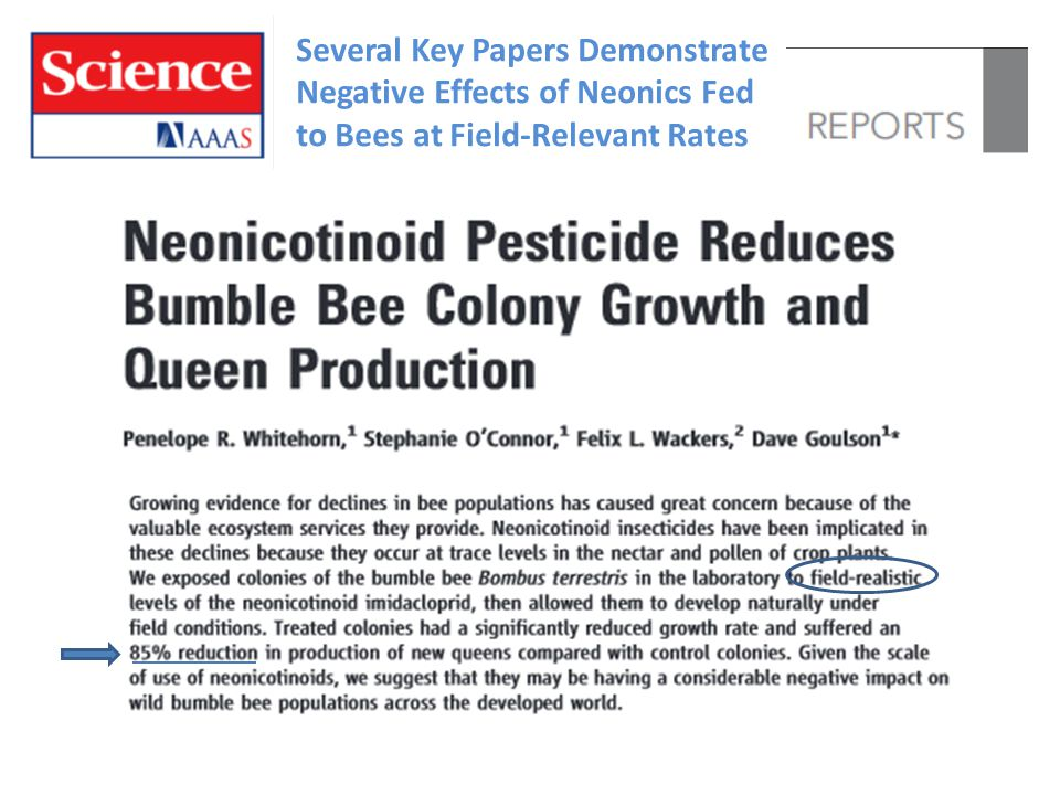 Several Key Papers Demonstrate Negative Effects of Neonics Fed to Bees at Field-Relevant Rates