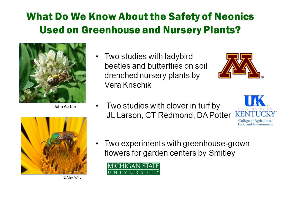 What Do We Know About the Safety of Neonics Used on Greenhouse and Nursery Plants? John Ascher Two studies with clover in turf by JL Larson, CT Redmon