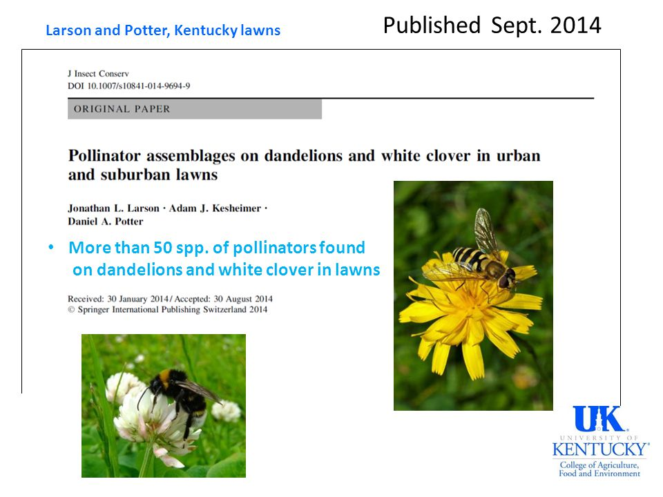 Published Sept. 2014 Larson and Potter, Kentucky lawns More than 50 spp. of pollinators found on dandelions and white clover in lawns