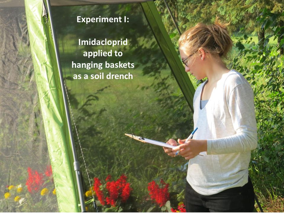 Experiment I: Imidacloprid applied to hanging baskets as a soil drench
