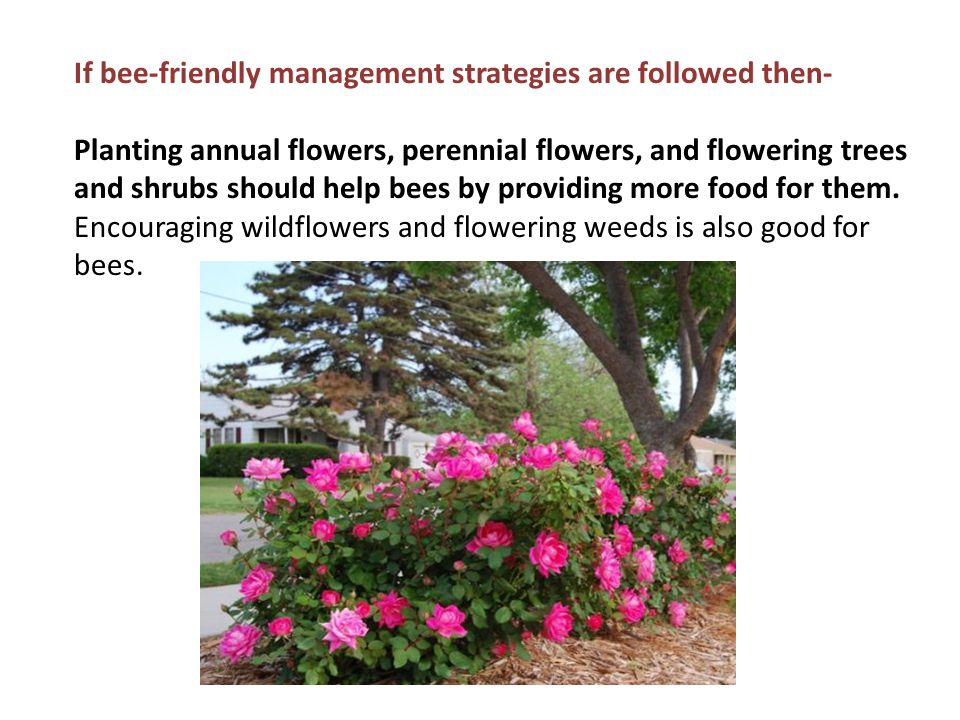 If bee-friendly management strategies are followed then- Planting annual flowers, perennial flowers, and flowering trees and shrubs should help bees b