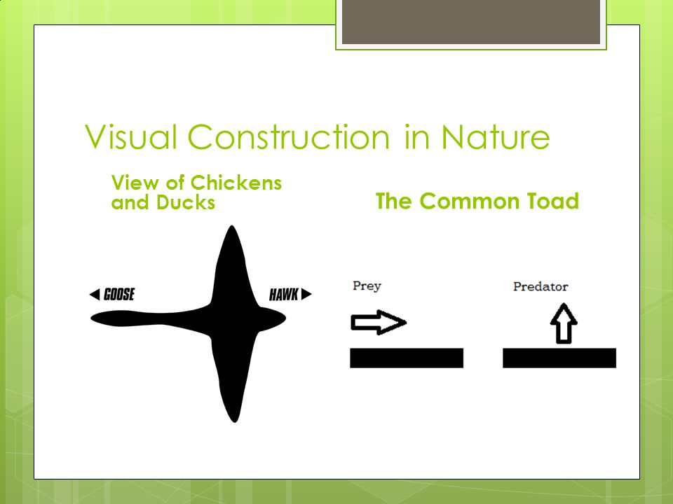 Visual Construction in Nature View of Chickens and Ducks The Common Toad