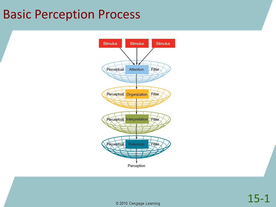 Basic Perception Process © 2015 Cengage Learning 15-1