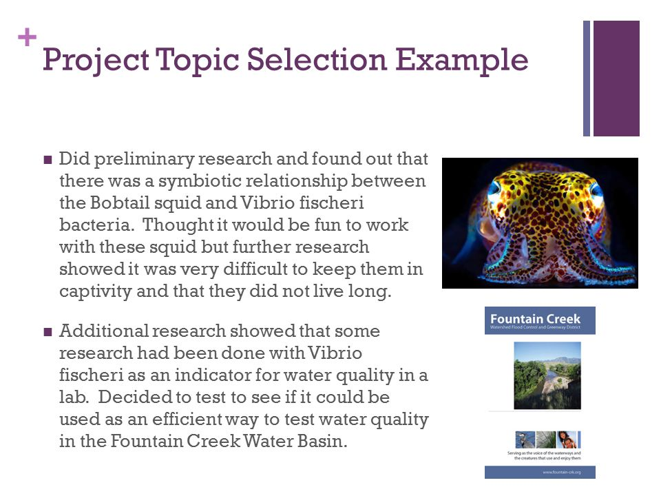 + Project Topic Selection Example Did preliminary research and found out that there was a symbiotic relationship between the Bobtail squid and Vibrio fischeri bacteria.