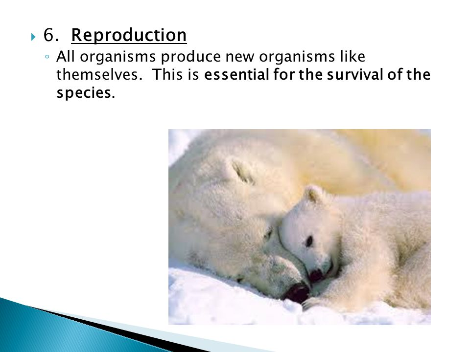  6.Reproduction ◦ All organisms produce new organisms like themselves.