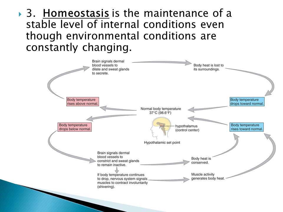  3. Homeostasis is the maintenance of a stable level of internal conditions even though environmental conditions are constantly changing.