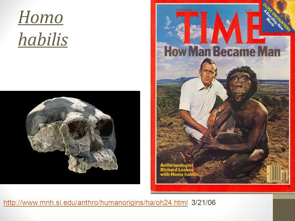 Homo habilis http://www.mnh.si.edu/anthro/humanorigins/ha/oh24.htmlhttp://www.mnh.si.edu/anthro/humanorigins/ha/oh24.html 3/21/06