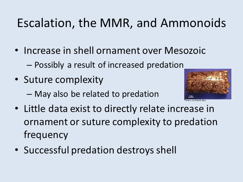 Escalation, the MMR, and Ammonoids Increase in shell ornament over Mesozoic – Possibly a result of increased predation Suture complexity – May also be related to predation Little data exist to directly relate increase in ornament or suture complexity to predation frequency Successful predation destroys shell Paleo.cortland.edu