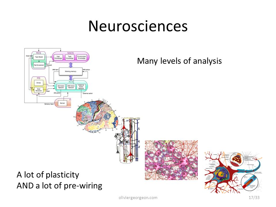 Neurosciences Many levels of analysis A lot of plasticity AND a lot of pre-wiring 17/33oliviergeorgeon.com