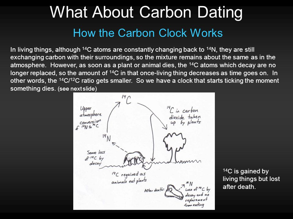 What About Carbon Dating How the Carbon Clock Works In living things, although 14 C atoms are constantly changing back to 14 N, they are still exchanging carbon with their surroundings, so the mixture remains about the same as in the atmosphere.
