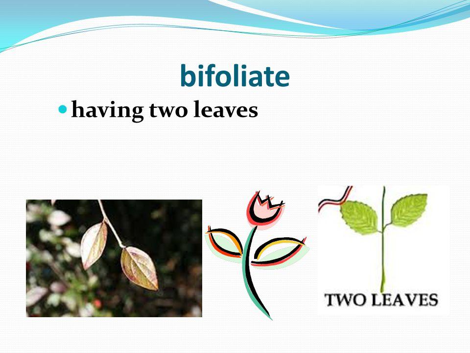"""""""Foli"""" means """"Leaf"""""""