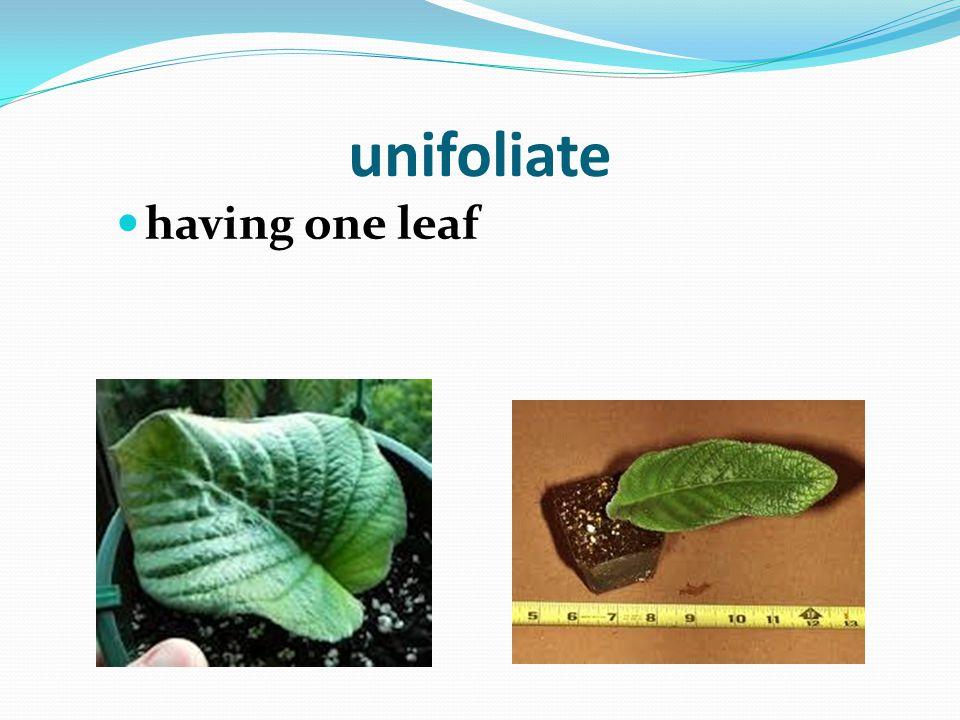 foil a thin sheet (leaf) of metal