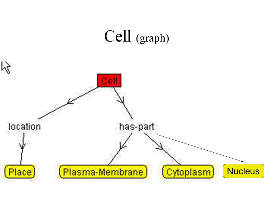 Cell (graph) Nucleus