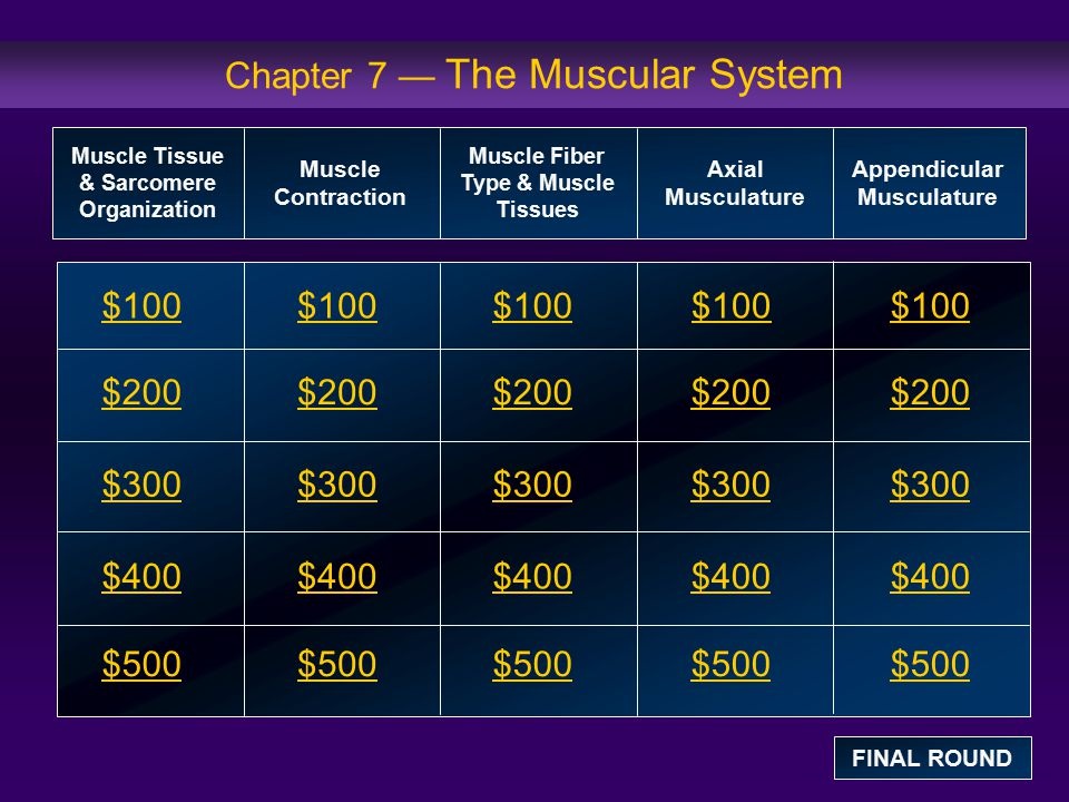 Chapter 7 — The Muscular System $100 $200 $300 $400 $500 $100$100$100 $200 $300 $400 $500 Muscle Tissue & Sarcomere Organization Muscle Contraction Mu