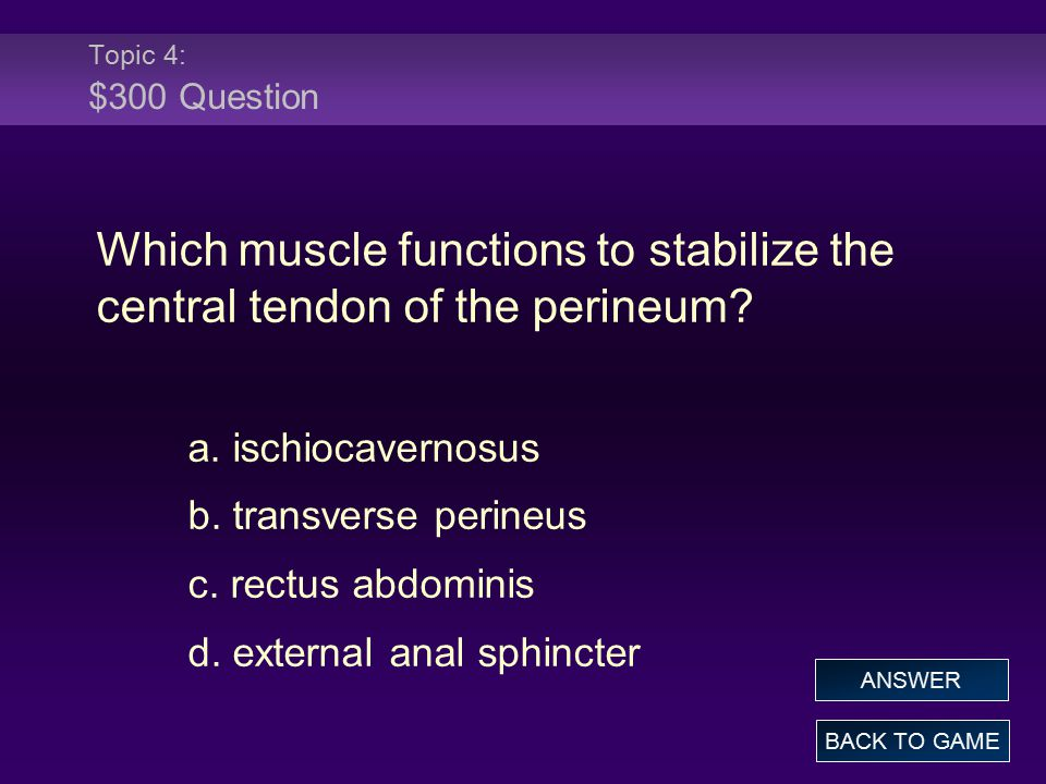 Topic 4: $300 Question Which muscle functions to stabilize the central tendon of the perineum? a. ischiocavernosus b. transverse perineus c. rectus ab