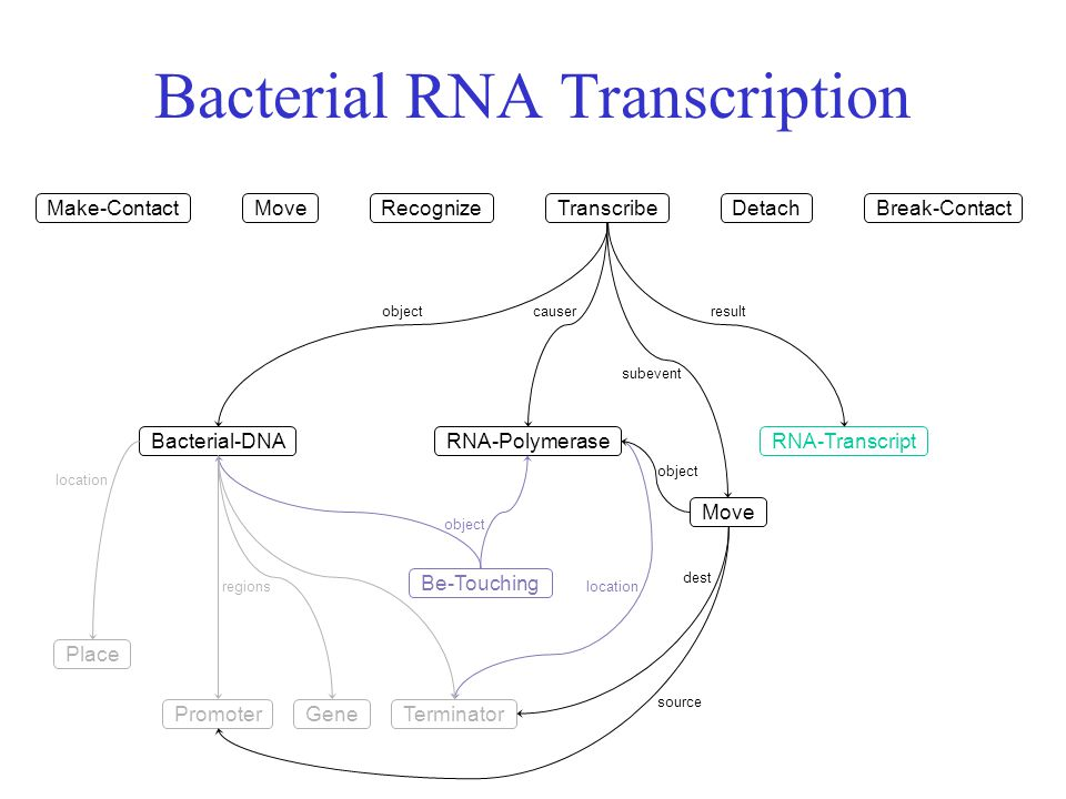 Bacterial RNA Transcription Make-Contact Bacterial-DNARNA-Polymerase Place location object Be-Touching location MoveRecognizeTranscribeDetachBreak-Contact RNA-Transcript GenePromoterTerminator regions objectcauserresult subevent Move object dest source