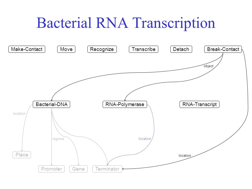 Bacterial RNA Transcription Make-Contact Bacterial-DNARNA-Polymerase Place location MoveRecognizeTranscribeDetachBreak-Contact RNA-Transcript GenePromoterTerminator regions location object