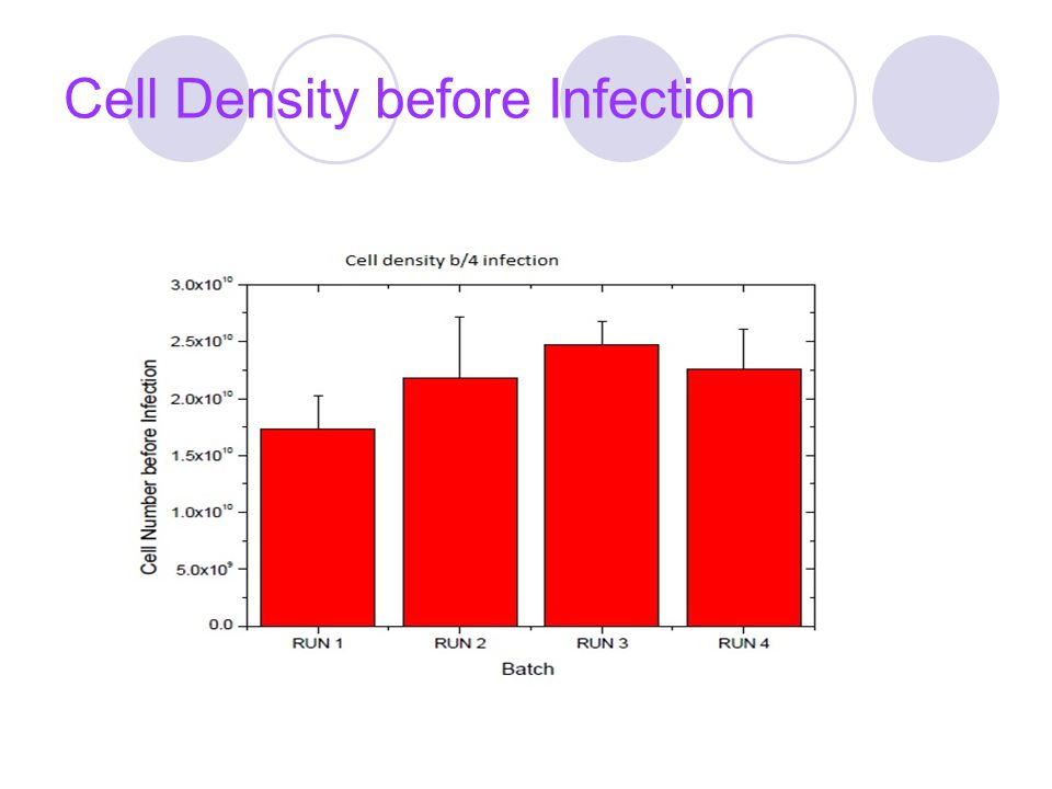 Cell Density before Infection