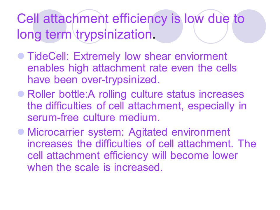 Cell attachment efficiency is low due to long term trypsinization.
