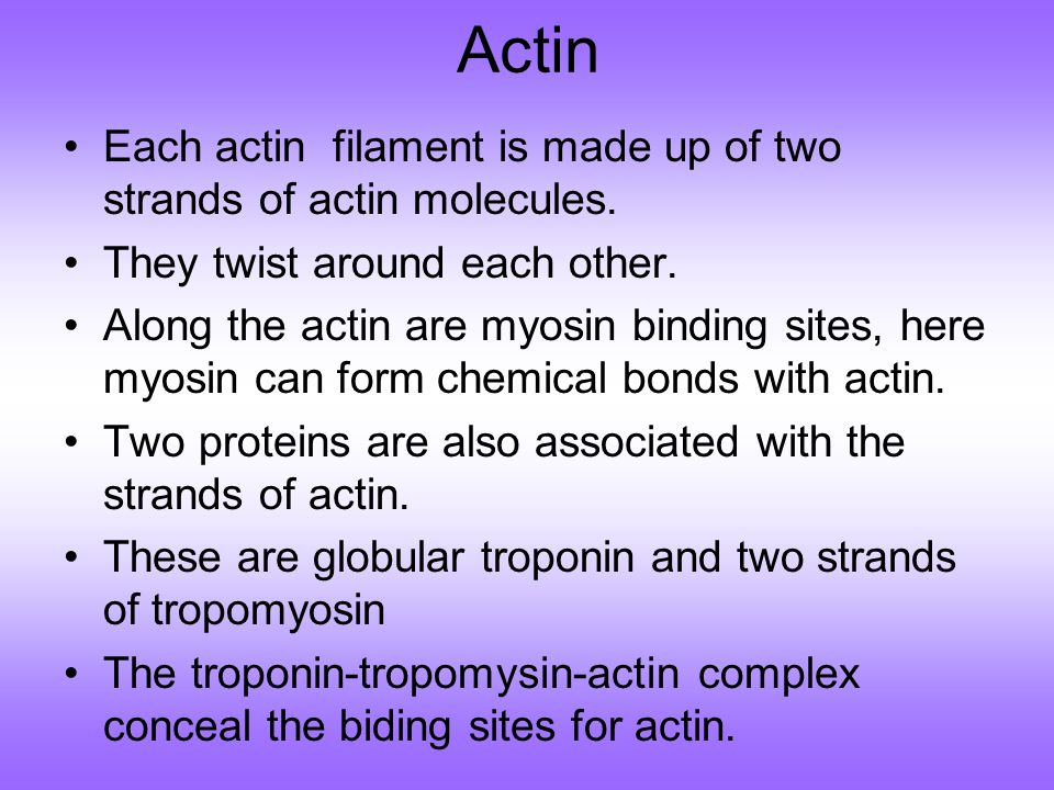 Actin Each actin filament is made up of two strands of actin molecules.