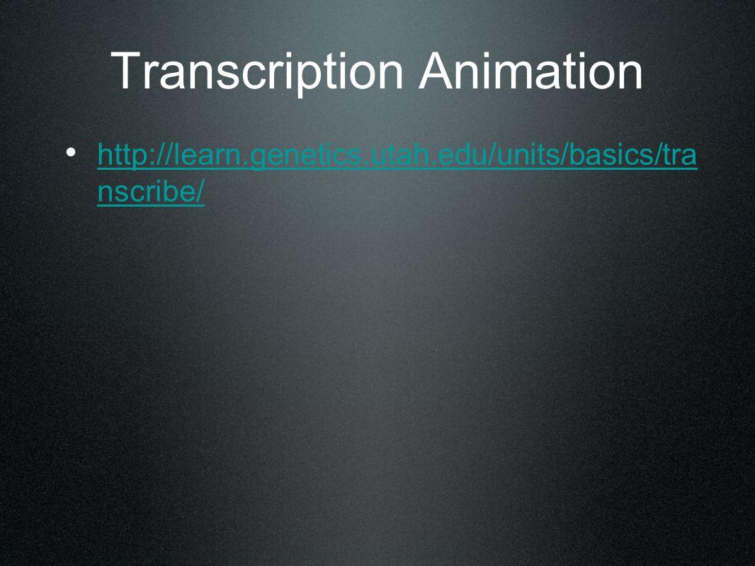 Transcription Animation http://learn.genetics.utah.edu/units/basics/tra nscribe/ http://learn.genetics.utah.edu/units/basics/tra nscribe/