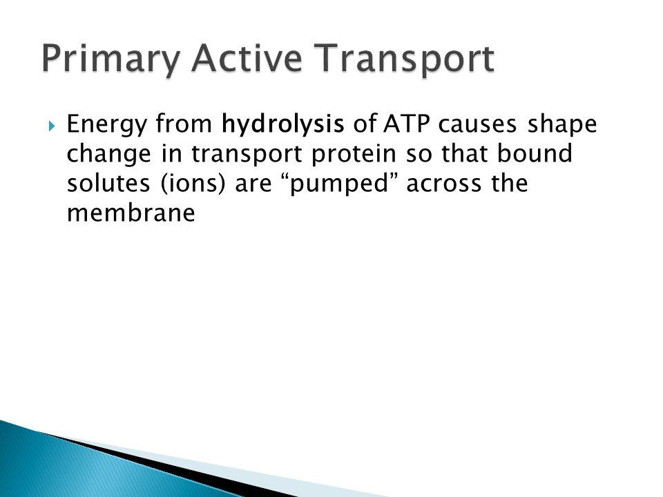  Energy from hydrolysis of ATP causes shape change in transport protein so that bound solutes (ions) are pumped across the membrane