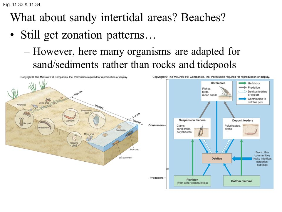 What about sandy intertidal areas.Beaches.