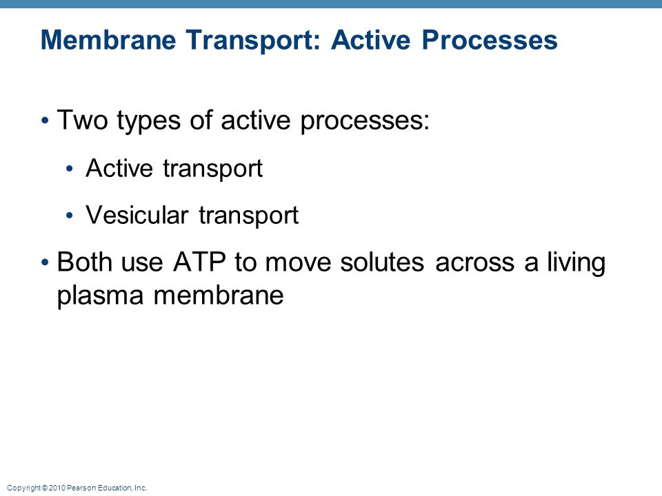 Copyright © 2010 Pearson Education, Inc. Membrane Transport: Active Processes Two types of active processes: Active transport Vesicular transport Both