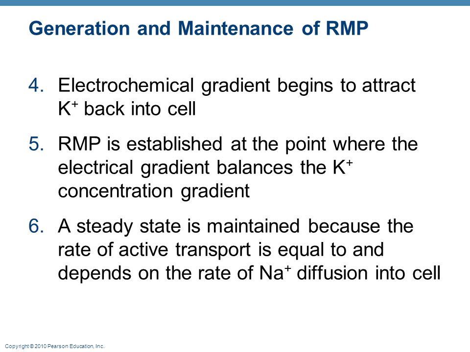 Copyright © 2010 Pearson Education, Inc. Generation and Maintenance of RMP 4.Electrochemical gradient begins to attract K + back into cell 5.RMP is es