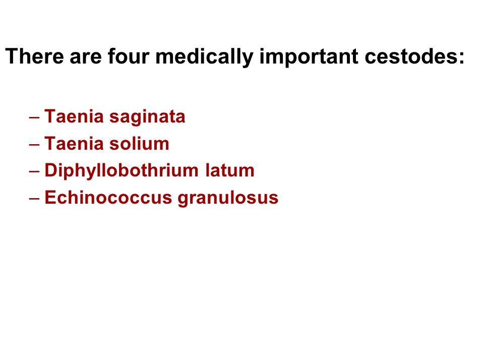 There are four medically important cestodes: –Taenia saginata –Taenia solium –Diphyllobothrium latum –Echinococcus granulosus