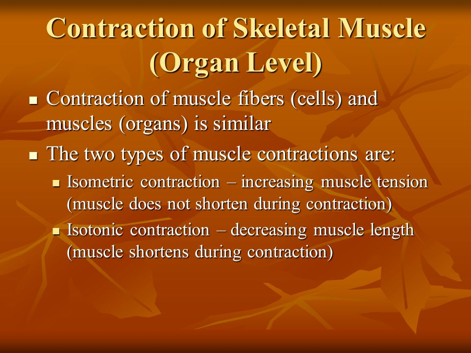 Contraction of Skeletal Muscle (Organ Level) Contraction of muscle fibers (cells) and muscles (organs) is similar Contraction of muscle fibers (cells)