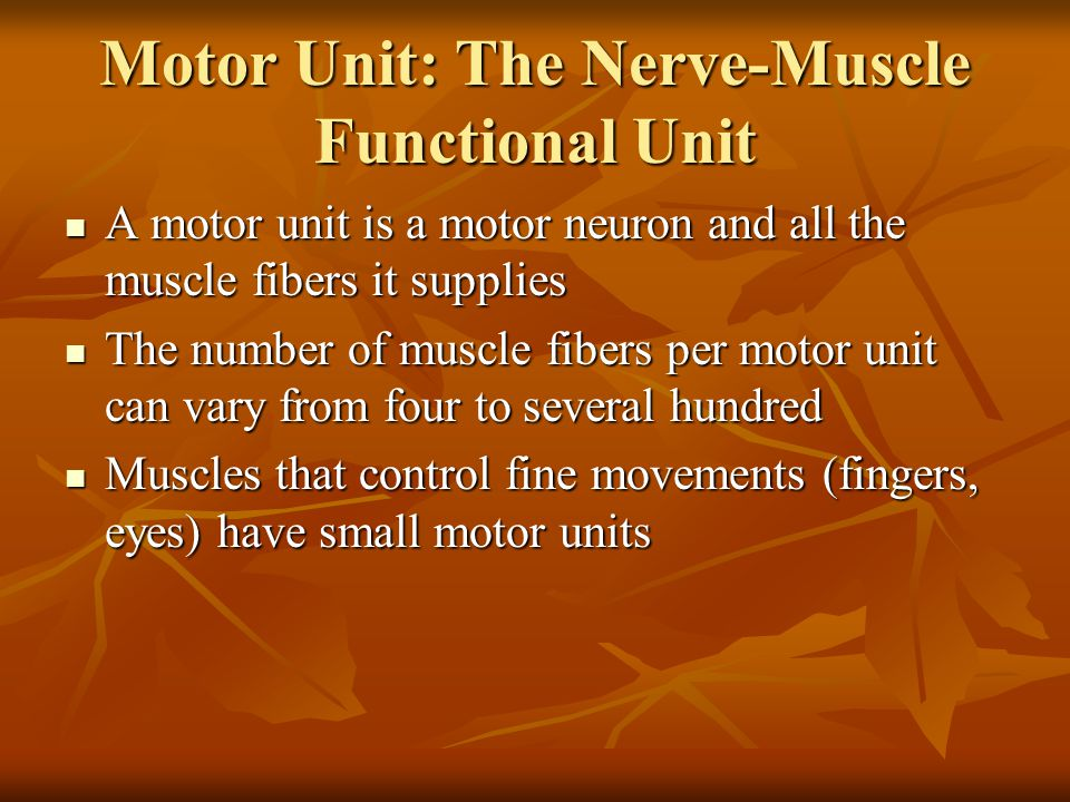 Motor Unit: The Nerve-Muscle Functional Unit A motor unit is a motor neuron and all the muscle fibers it supplies A motor unit is a motor neuron and a