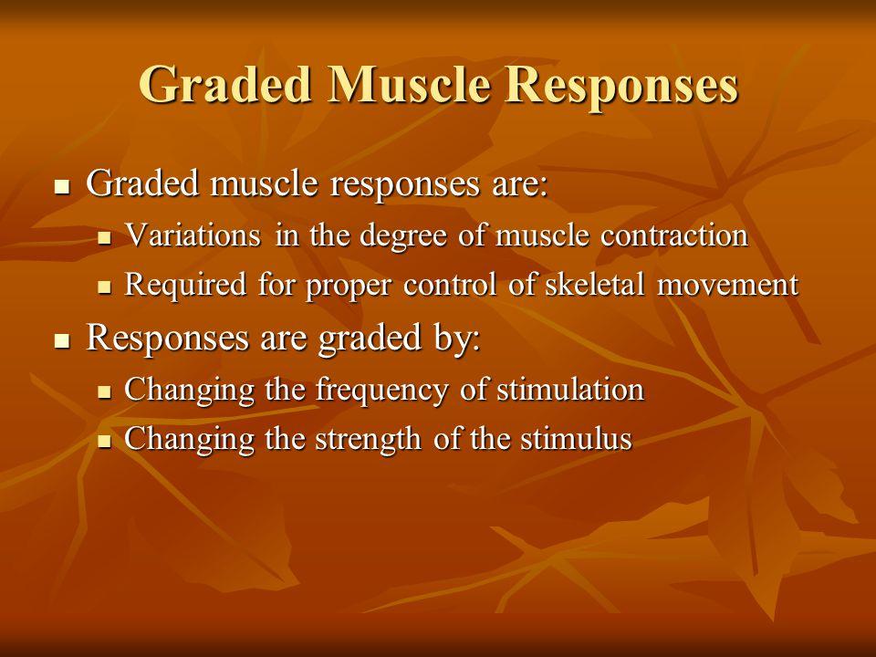 Graded Muscle Responses Graded muscle responses are: Graded muscle responses are: Variations in the degree of muscle contraction Variations in the deg
