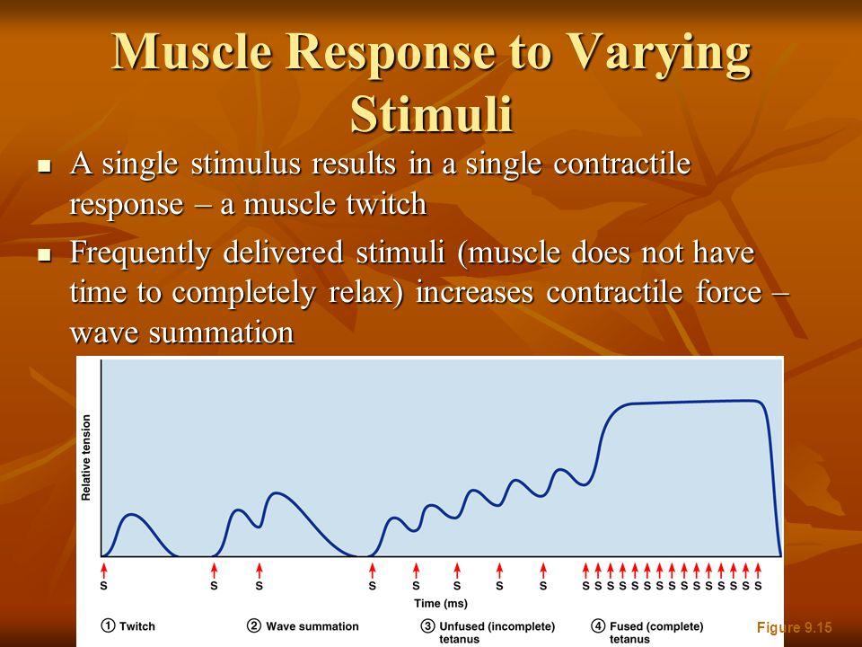 Muscle Response to Varying Stimuli A single stimulus results in a single contractile response – a muscle twitch A single stimulus results in a single