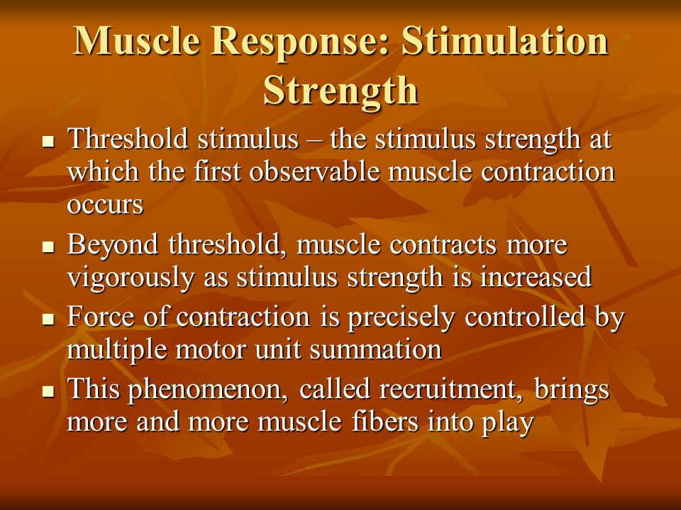 Muscle Response: Stimulation Strength Threshold stimulus – the stimulus strength at which the first observable muscle contraction occurs Threshold sti