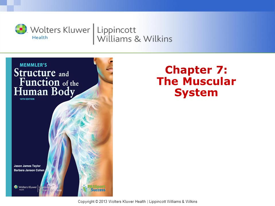 Copyright © 2013 Wolters Kluwer Health | Lippincott Williams & Wilkins Chapter 7: The Muscular System