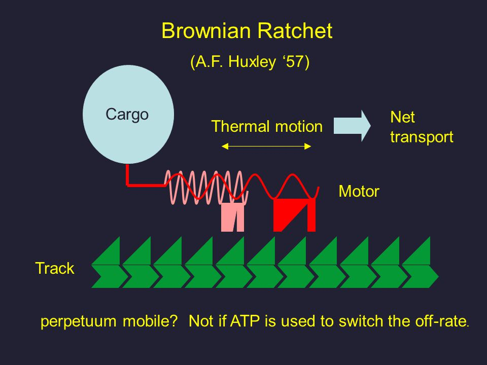 Brownian Ratchet (A.F. Huxley '57) Cargo Thermal motion Track Net transport perpetuum mobile.