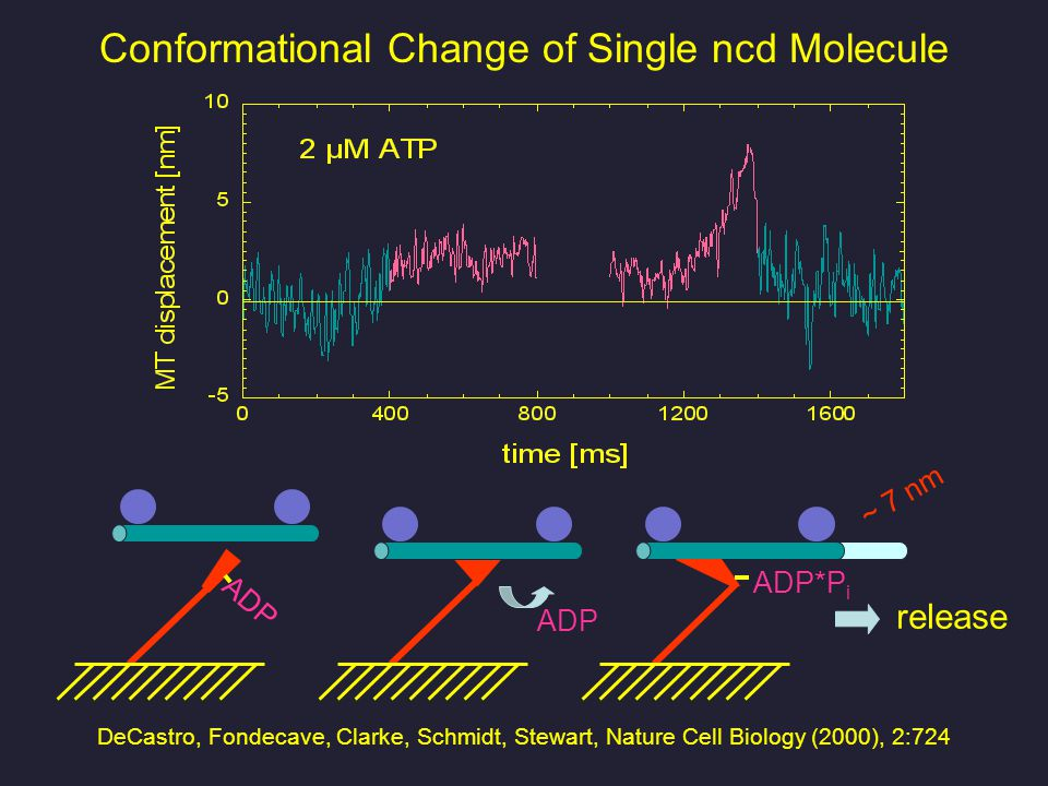 Conformational Change of Single ncd Molecule release DeCastro, Fondecave, Clarke, Schmidt, Stewart, Nature Cell Biology (2000), 2:724 ADP ADP*P i ~ 7 nm