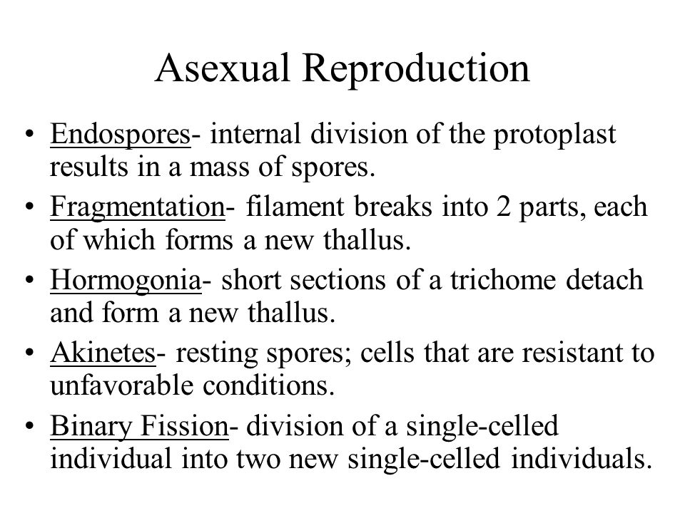 Asexual Reproduction Endospores- internal division of the protoplast results in a mass of spores.
