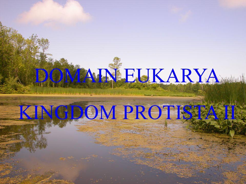 DOMAIN EUKARYA KINGDOM PROTISTA II