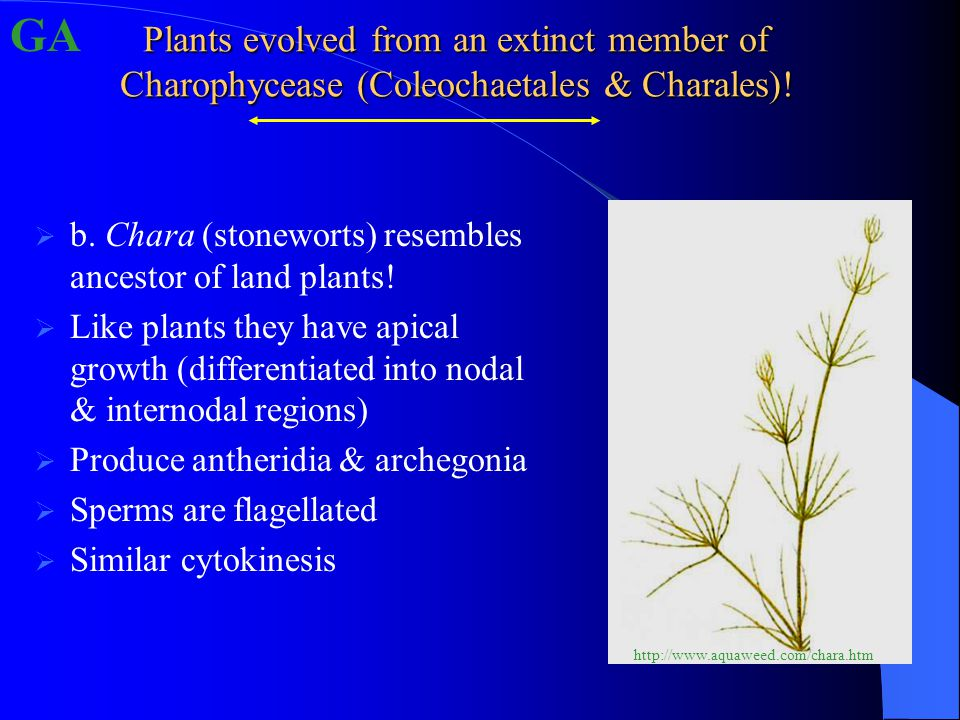 Plants evolved from an extinct member of Charophycease (Coleochaetales & Charales).