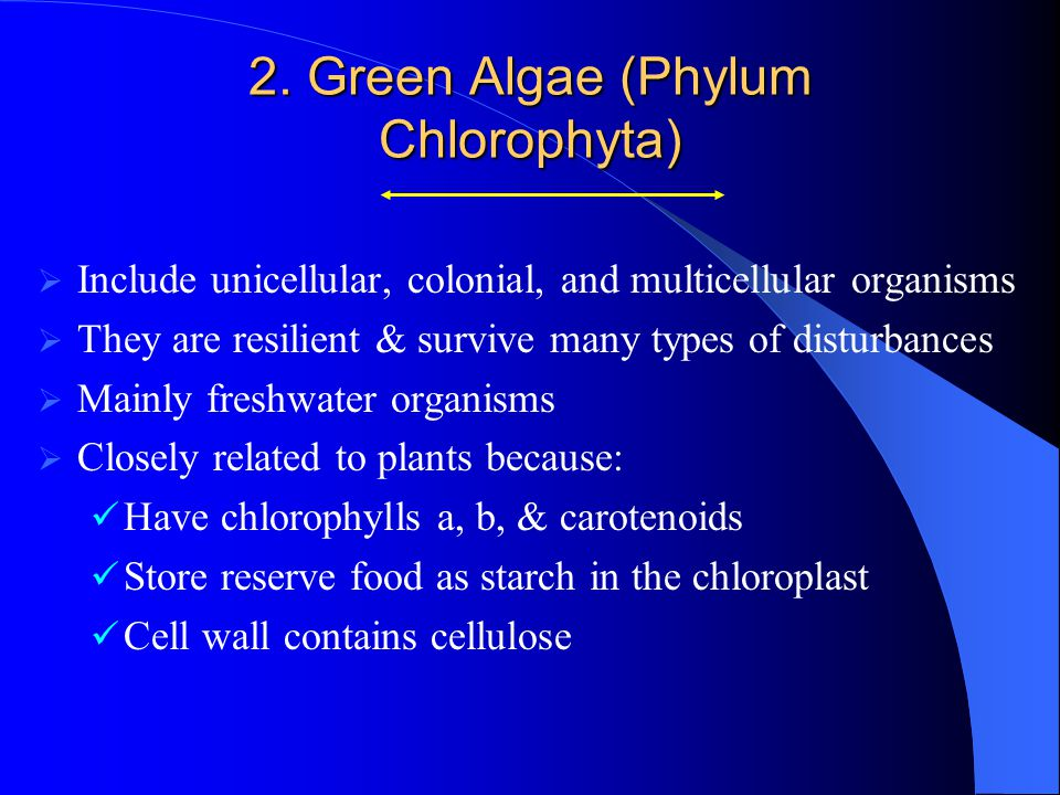 Class Chlorophyceae  The only living organisms in which cell division involves a phycoplast (Cleavage furrow)phycoplast  Zygotic meiosis  Mostly freshwater organisms  Produce red, orange, & green snow  Have flagellated and nonflagellated forms GA