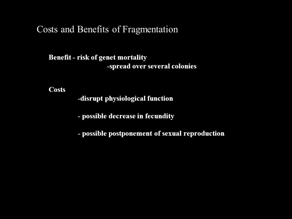 Costs and Benefits of Fragmentation Costs -disrupt physiological function - possible decrease in fecundity - possible postponement of sexual reproduction Benefit - risk of genet mortality -spread over several colonies