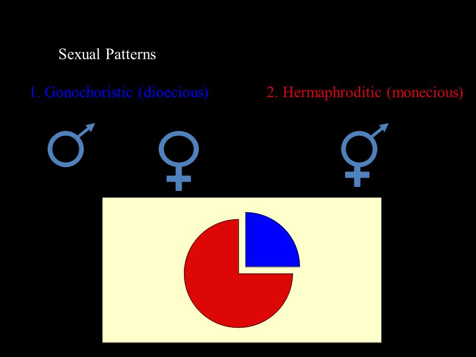 Sexual Patterns 1. Gonochoristic (dioecious)2. Hermaphroditic (monecious)