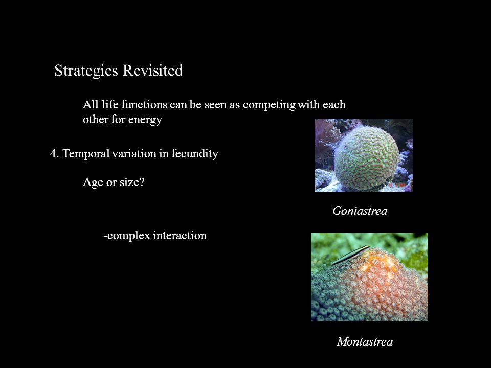 Strategies Revisited All life functions can be seen as competing with each other for energy 4.