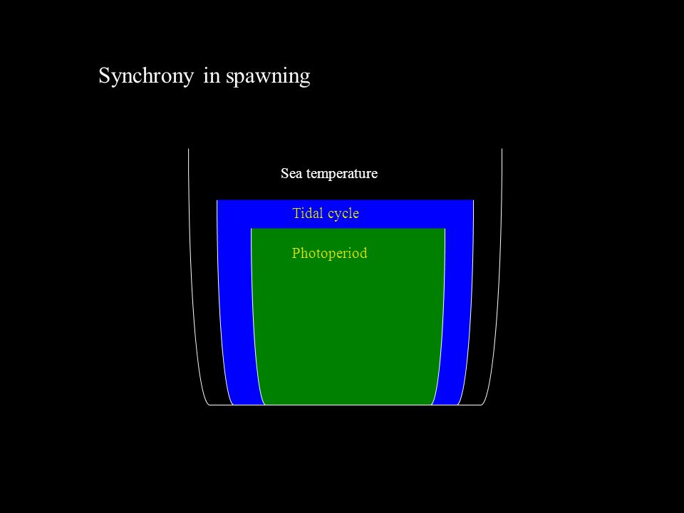 Synchrony in spawning Sea temperature Tidal cycle Photoperiod