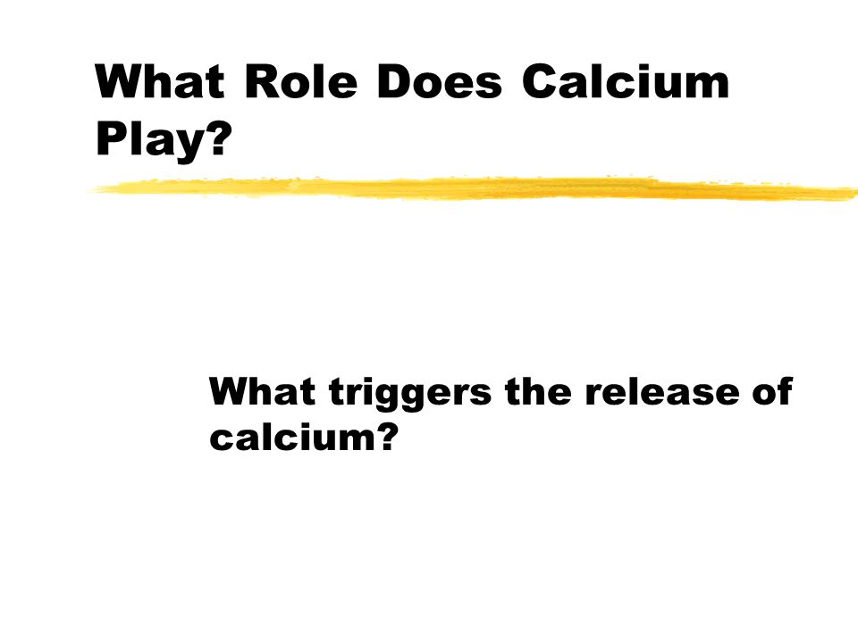 Muscle Contraction zSuccessive interaction causes sliding of the filament, shortening of the sarcomere, thus shortening of the entire muscle zCalcium is removed from the troponin molecule and returned to the S.R.