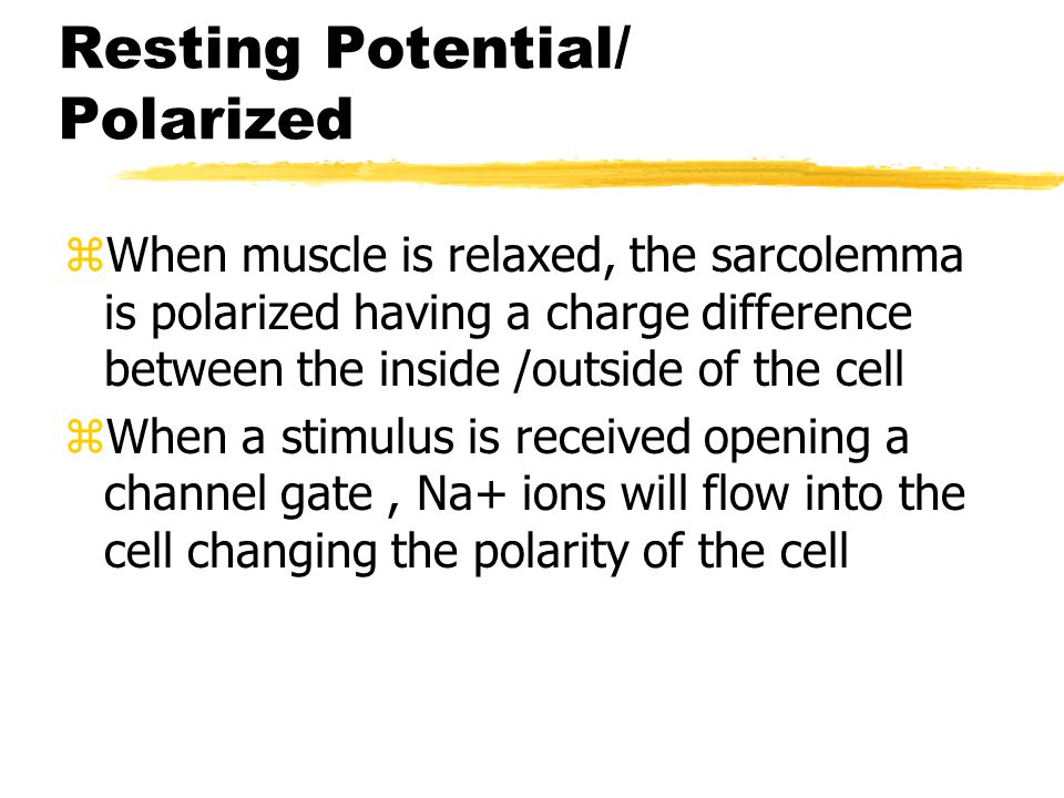 Action Potentials zResting Membrane Potential zPolarized - positive charge outside, negative charge inside zDepolarized - positive charge inside, negative charge outside zRepolarized - positive charge reestablished outside, negative charge inside