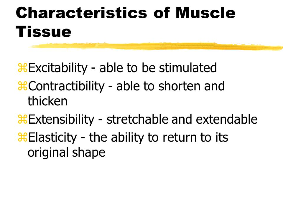 Functions of Muscle Tissue zMovement zHeat production zMaintenance of posture zMuscle contraction produces 85% of body heat
